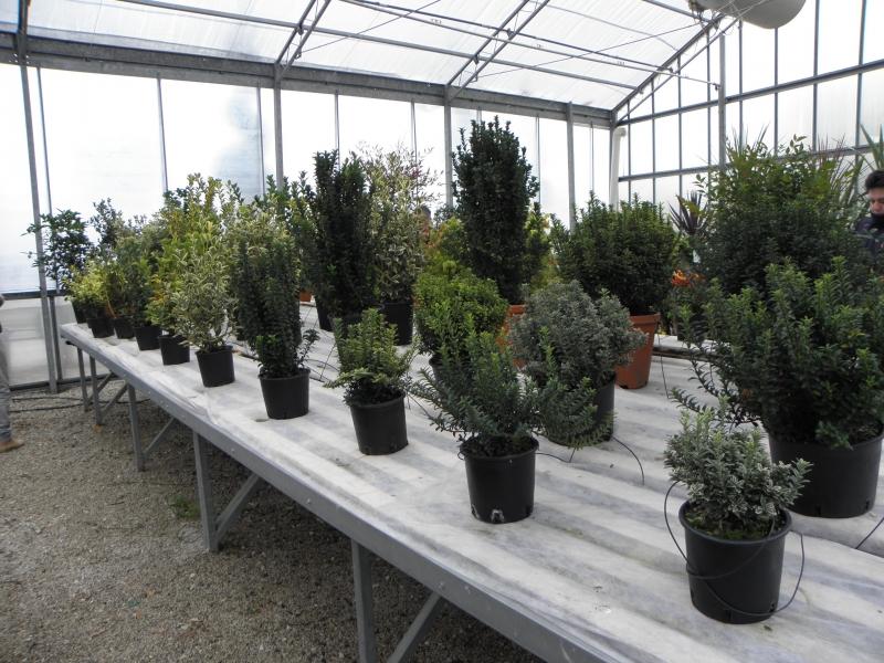 2018 import növények Tavasz