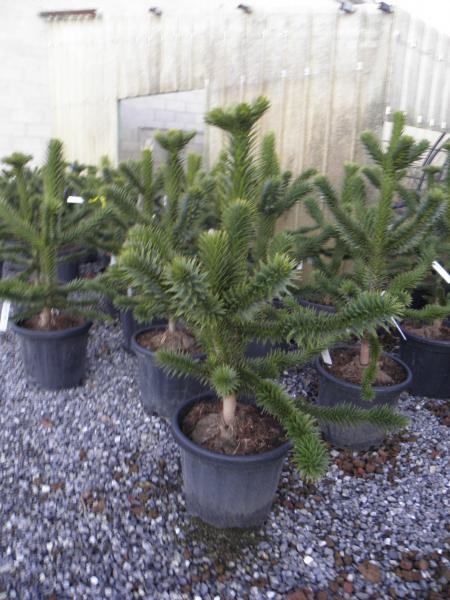 2019 import növények Tavasz